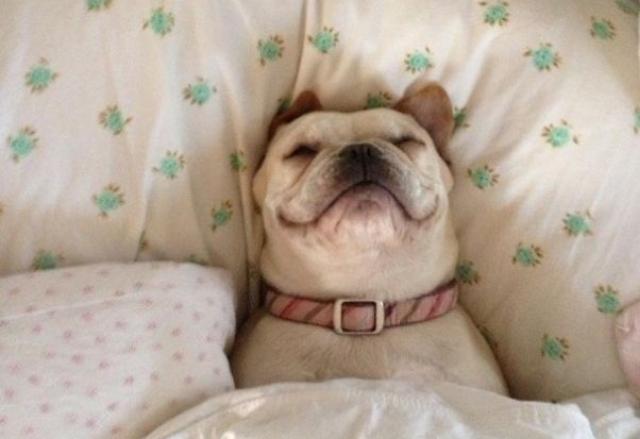Resultado de imagen de perros durmiendo