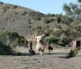 Perro Gigante 01