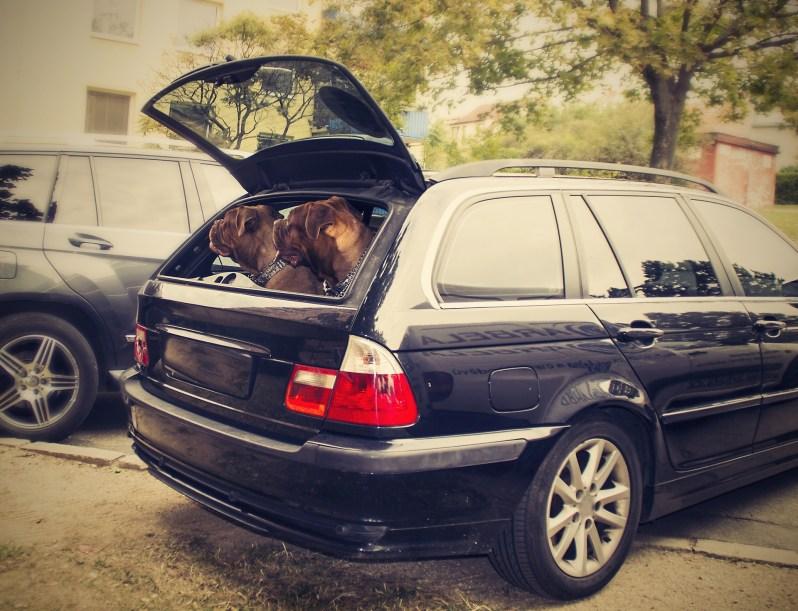 3. No lo dejes dentro del auto