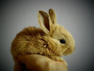 para mantener sano a tu conejo