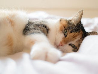 Aprende a monitorear a tu mascota con PetChatz