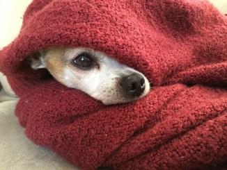 Consejos para cuidar el pelo de tu perro durante el invierno