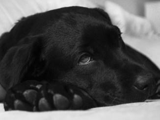 Consejos para evitar el resfriado canino