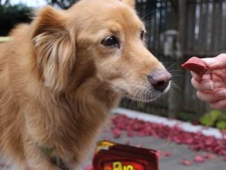 Alimentación del perro en verano