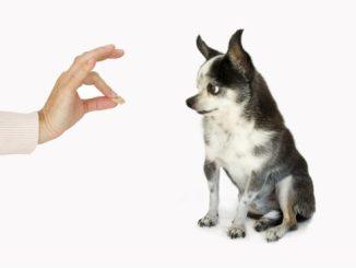 alimentos para humanos que tu perro puede comer