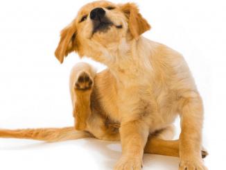 Quienes tienen una mascota disfrutan de cuidarla y procurar que su salud sea fuerte