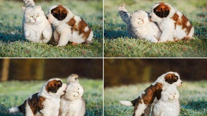 15 fotos de animales que endulzarán tu corazón