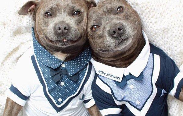 Los 10 perros más mimados y fashion de lnternet