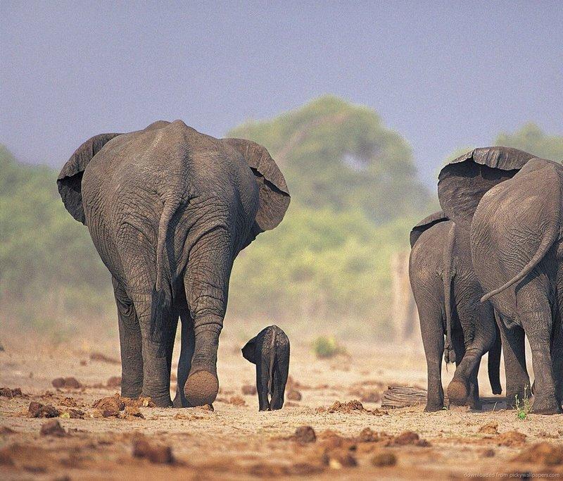 #4.- Los elefantes son a todo terreno
