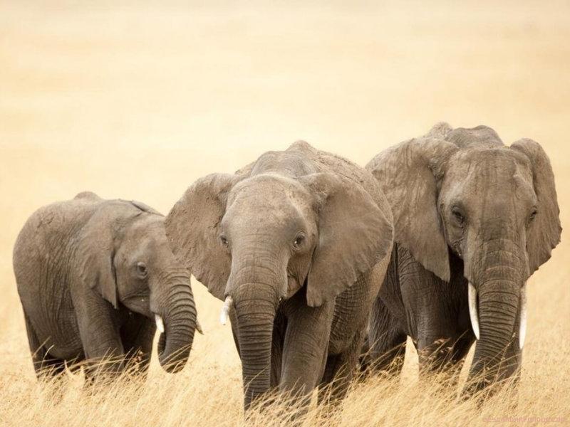 #5.- El elefante y el pulso cardiaco