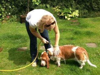 Cómo bañar a mi perro sin sufrir en el intento