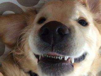 La nueva moda: Brackets para perros