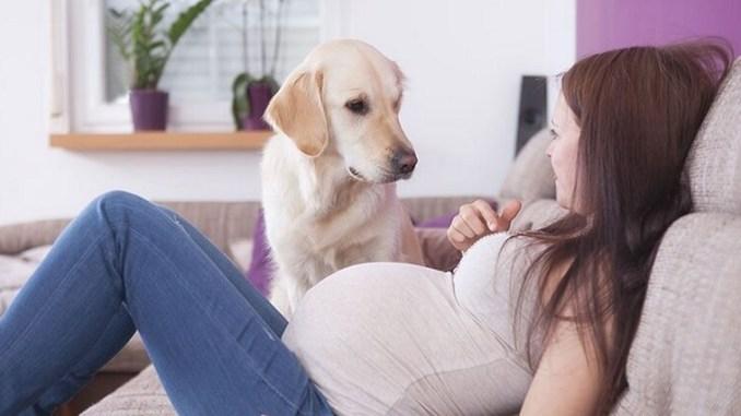 Beneficios de tener una mascota durante el embarazo