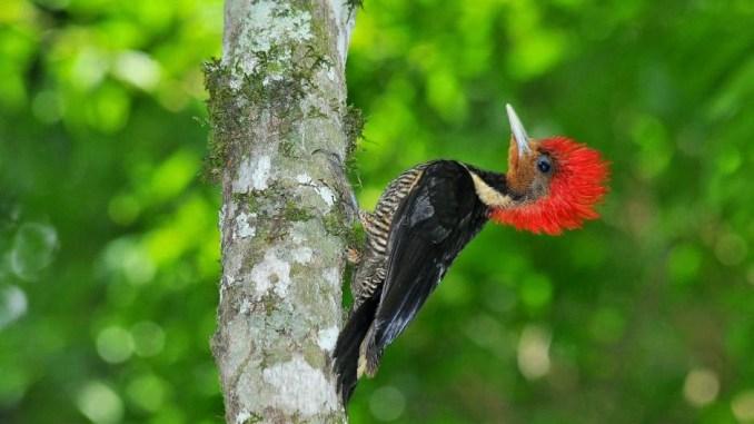Pájaro carpintero