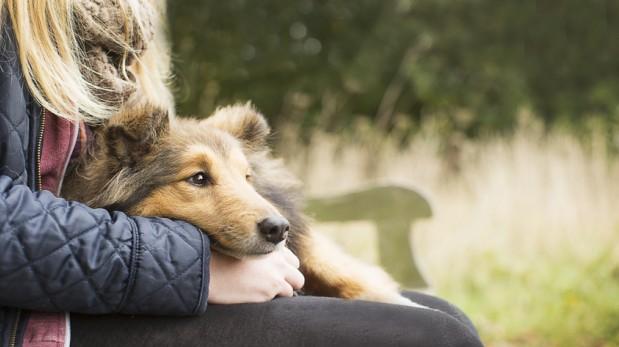 Los beneficios de las mascotas en la salud mental