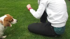 Tu perro tiene recuerdos de lo que hacen juntos
