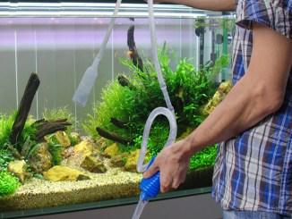 Cómo poner en funcionamiento un acuario doméstico