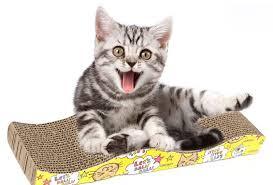 Qué hacer si el arenero del gato huele feo