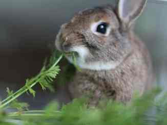 Plantas y Alimentos Prohibidos para Conejos