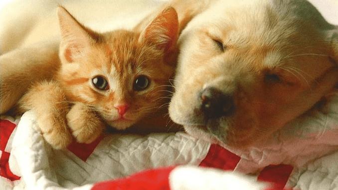 Quien es mas Inteligente el Perro o el Gato
