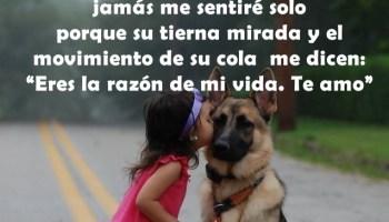 Poemas De Amor A Mi Perro Pablo Neruda Dedicado A Los Perros