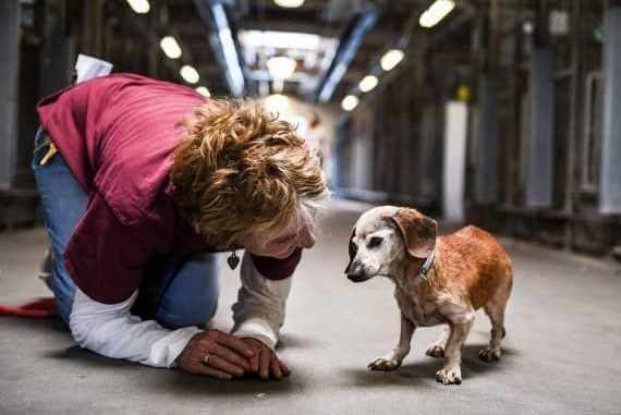 Aprender a Cuidar un Perro Ciego