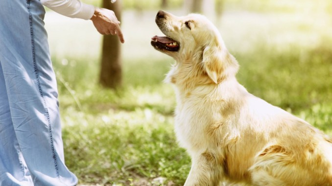 Enseñar a mi Perro a Acostarse