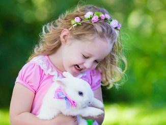 Todo lo que Necesita Saber para Adoptar un Conejo