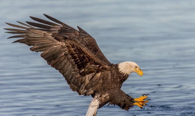 Cuales son los Sentidos más Desarrollados de las Aves