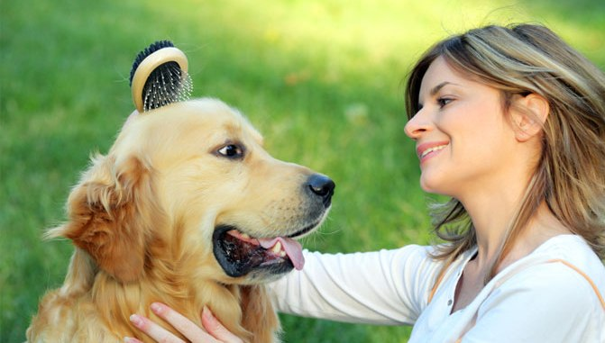 Nociones básicas a tener en cuenta para que tu perro se mantenga saludable
