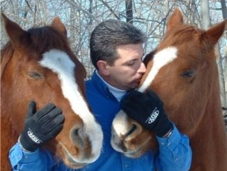 ¿Cómo cuidar un caballo?