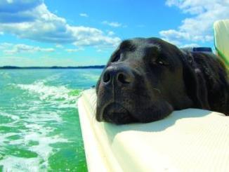 Cómo ayudar a los perros ante las olas de calor