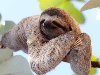 Cuáles son los Animales más Lentos del Mundo
