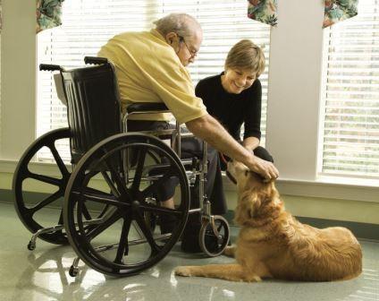 Beneficios de tener una mascota como compañía en la adultez