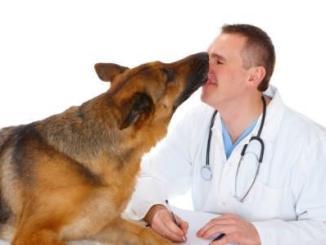 Cómo escoger un buen veterinario para tu mascota