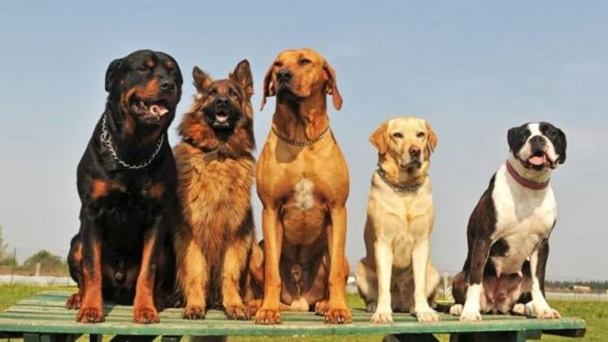 Cuánto Viven los Perros Según su Raza