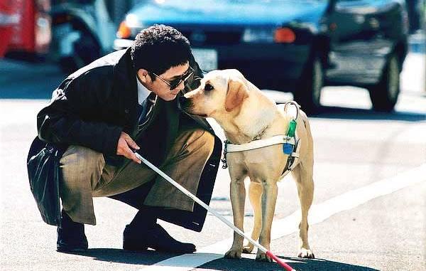 Importancia y Características del perro lazarillo
