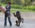babuino3