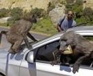babuino91