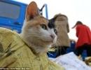 cat-china2