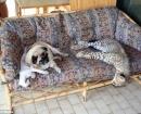 Compartiendo el sofá con el resto de las mascotas