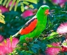 Papagayo-Alirrojo-(4).jpg