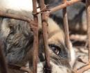 china-dogs1