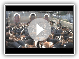 Beagle-Harrier in Zug ist nourrir - Beagle-Harrier Fütterung