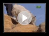 Rasse alles darüber - Cairn-Terrier