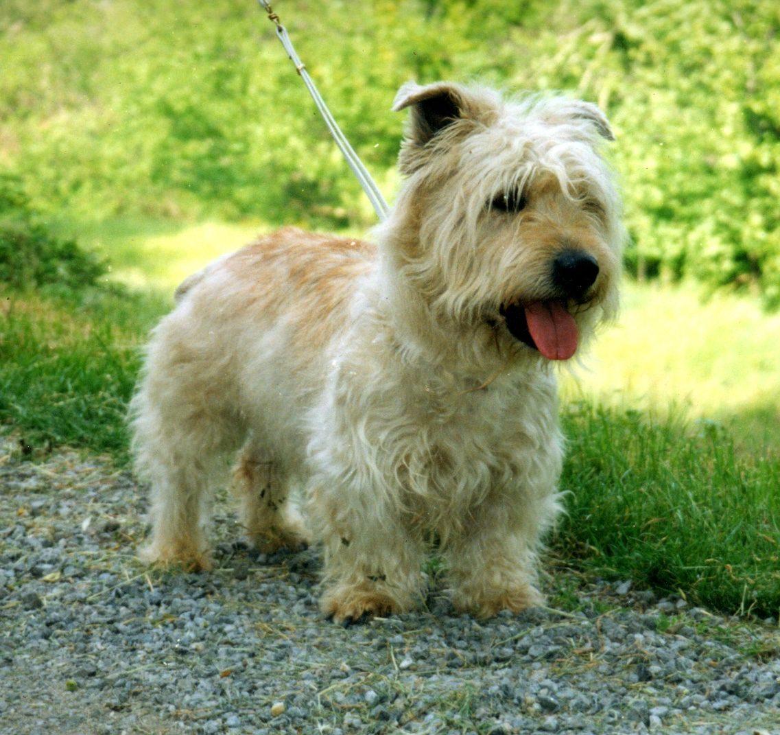 Glen de Terrier Imaal