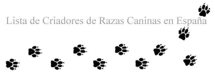 Cadelas de raças criadores em Espanha
