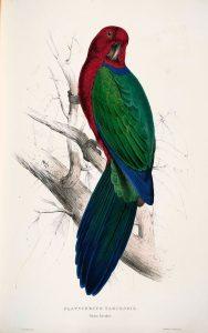 Papagayo Granate