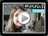 Bedlington Terrier CÃES 101 - PRÓS E CONTRAS