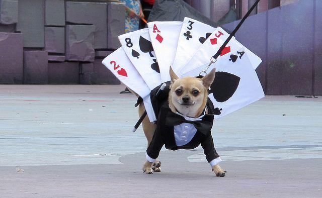 Resultado de imagen de carnaval perros